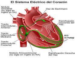 El sistema eléctrico del corazón ¿Qué es una arritmia?